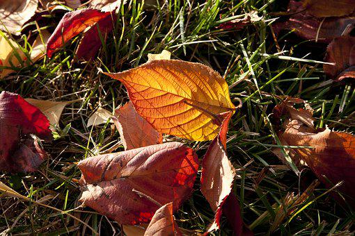 Autumn Leaves, Leaves, Autumn, The Leaves, Leaf