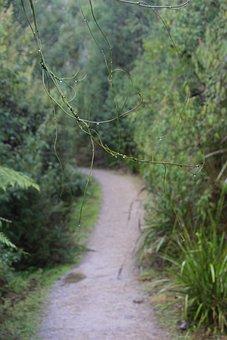 Trail, Walk, Hiking, Outdoor, Trekking, Backpacker