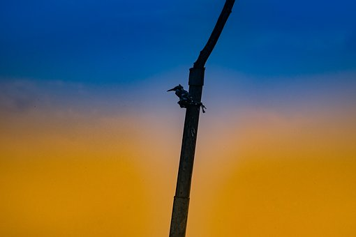 Bird, Lonely, Alone, Tree Branch, Color, Yellow, Blue