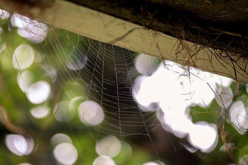 Autumn, Spider Web, Detail