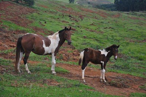 Horses, Farm, Animal, Equestrian