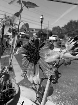 B W, Flower, Takoma