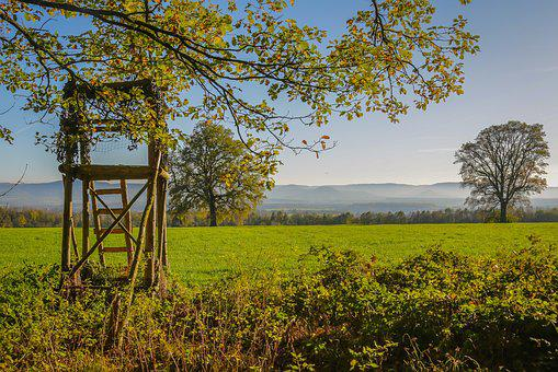 Autumn, Perch, Hunter Seat, Fall Foliage, Hunting Was