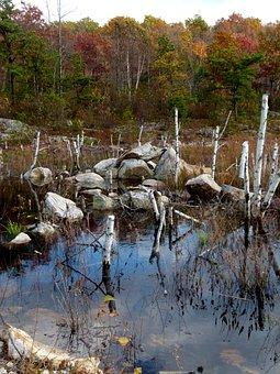 Beaver, Pond, Beaver Work