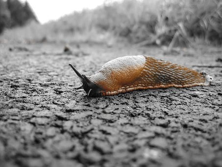 Snail, Slug, Nature, Reptile, Slowly, Probe, Brown