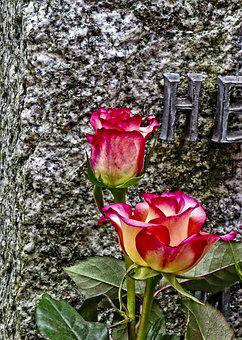 Rose, Flower, Floral, Nature, Blossom, Tombstone