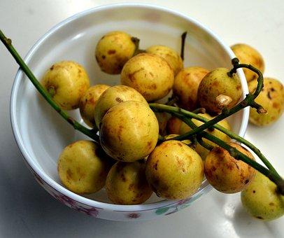 Burmese Grape, Baccaurea Ramiflora, Tropical Fruit