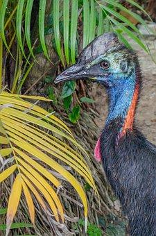 Cassowary, Bird, Beach, Sand, Animal, Nature, Wildlife