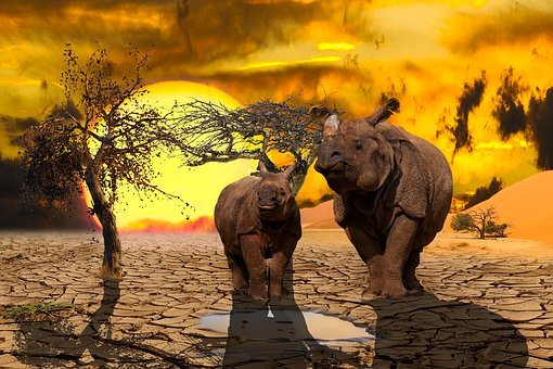 Nature, Landscape, Animals, Climate Change, Composing