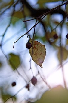 Autumn, Mood, Foliage, Dry Leaves, Crop, Light