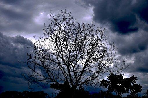 Albor Dry, Albor, Clouds, Sky, Branches, Grey