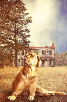 Animal, Dog, Kangal, Guard Dog, Home, Garden, Hof