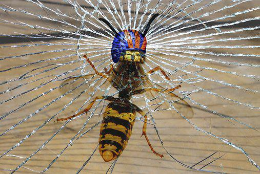 Wasp, Helm, Fracture, Impact, Funny, Composing