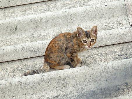 Cat, Roof, Animal, Pet, House, Cute, Kitten, Feline
