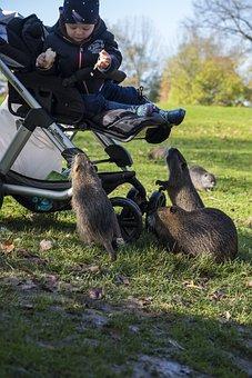 Nutria, Beaver, Rodent, Mammal, Castor, Muskrat