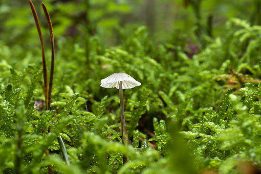 Mushroom, Alpino-oriented Milk Helmling, Forest, Nature