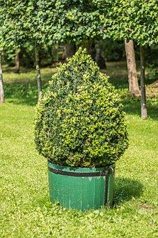 Bush, Park, Plant, Garden, Tree, Trees, Summer