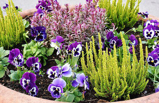 Planting, Flowers, Stiefmütt Cher Chen, Plant, Green