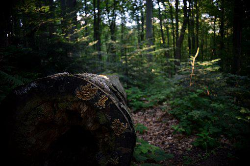 Tree, Wood, Log, Forest, Nature, Trunk, The Bark