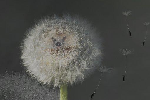 Dandelion, Nature, Seeds, Dandelion Seeds, Umbrella