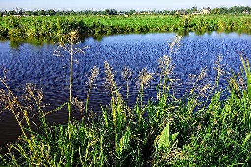 Water, Waterway, Shore, Vegetation, Grass, Field