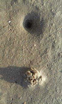 Watts, Lugworm, Wadden Sea, Watt Worm Pile, Sand
