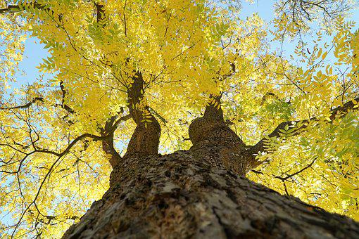 Tree, Yellow, Autumn, Leaves, Sky, Crown