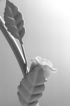 Rose, Leaves, Candlestick, Stalk, Black And White, Grey