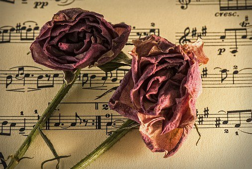 Sheet Music, Manuscript, Old Time, Romance, Carnation