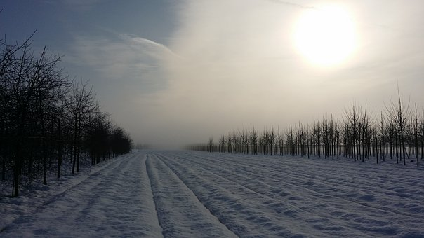 Winter, Snow, White, Cold, Nature, Trees, Plane, Frozen