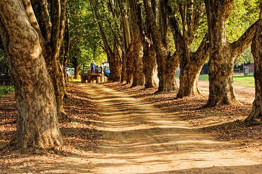 Country Road, Farm, Tree Lined, Landscape, Countryside
