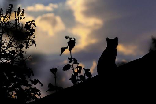 Cat, Rooftop, Roof, Building, House, Exterior, Old