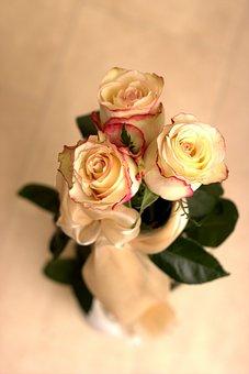 Rose, Flower, Petals, Bouquet, Bridal Bouquet, Bride