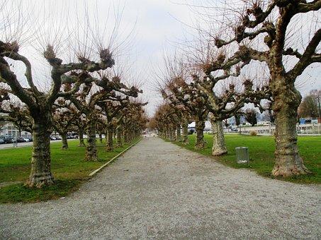 Trees, Plane Trees, Avenue, Mood, Lake Constance