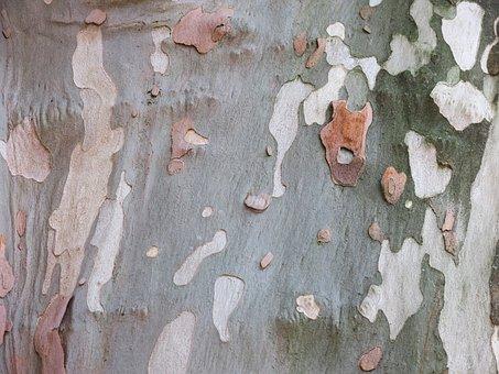 Plane, Bark, Camouflage Pattern, Pattern, Log, Tree