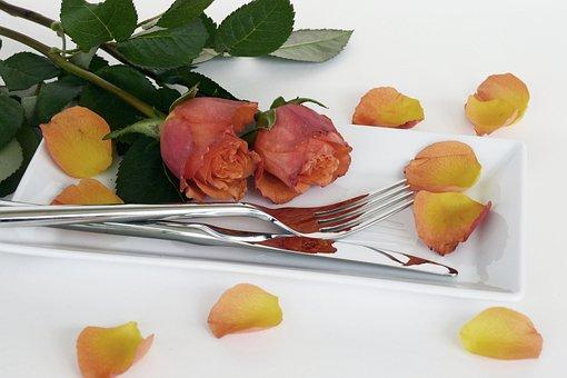 Roses, Rose Flower, Flowers, Petals, Red, Orange, Green