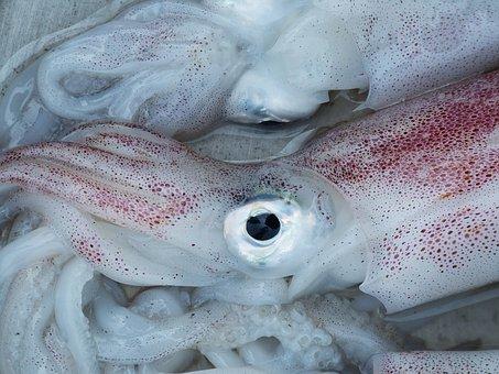 Squid, Octopus, Eye, Seafood, Fischer, Eat, Food, Meal