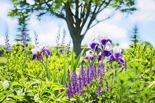 Irises, Garden, Summer, Nature, Flowers, Green, Purple