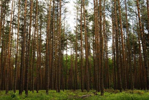 Forest, Trees, Sky, Uckermark, Mecklenburg