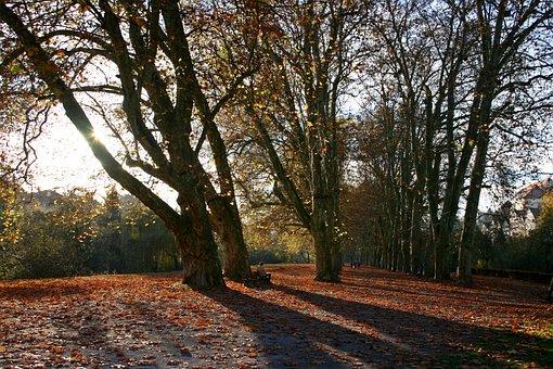 Neckar Island, Neckar Shore, Tübingen, Avenue, Trees