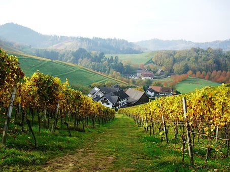 Vineyard, Oberkirch, Bottenau, Schlatten, Dilger Hof