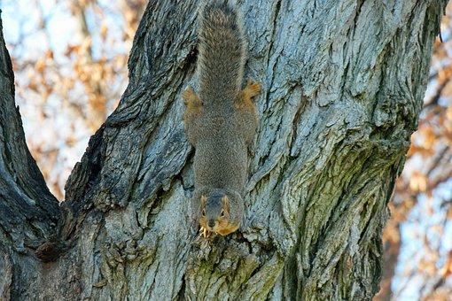 Squirrel, Chipmunk, Rodent, Animal, Wildlife, Mammal