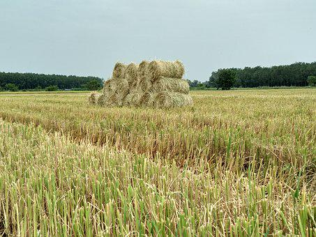 Straw, Dry Grass, Silk, Field, Harvest, Agriculture