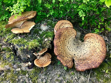 Fungus, Mushroom, Boletus, Nature, Moss, Wood, Fall