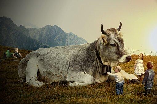 Cow, Cowboy, Children, Farm, Dusk, Agriculture, Beef