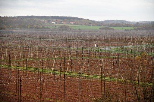 Chmelnice, Harvested, Polnohospodářství, Hops
