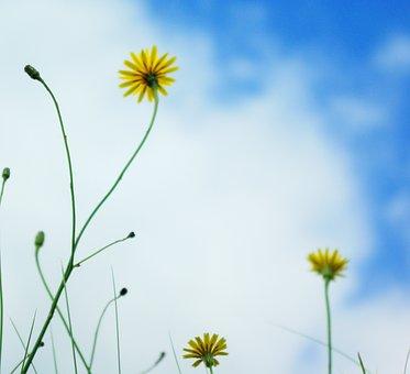Wild Flowers, Dawlish Warren, Yellow, Devon, Beach, Uk