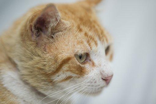 Cat, Animal, Beautiful, Tabby Cat, Eye, Sad