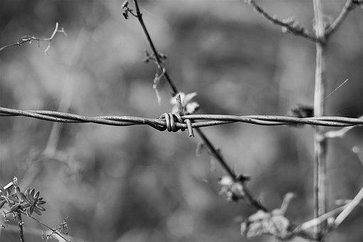 Barbed Wire, Macro, S W, Wire, Metal, Fence, Barrier