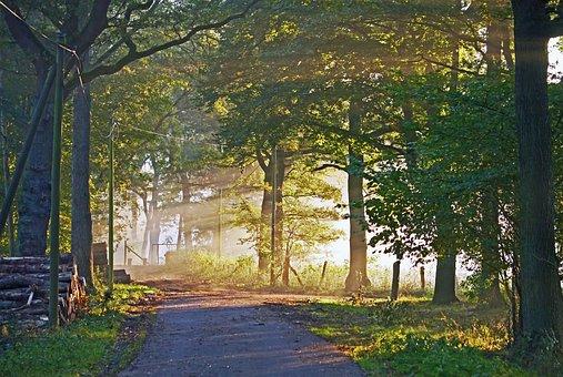 Autumn Light, Morning Mist, Forest, Forestry